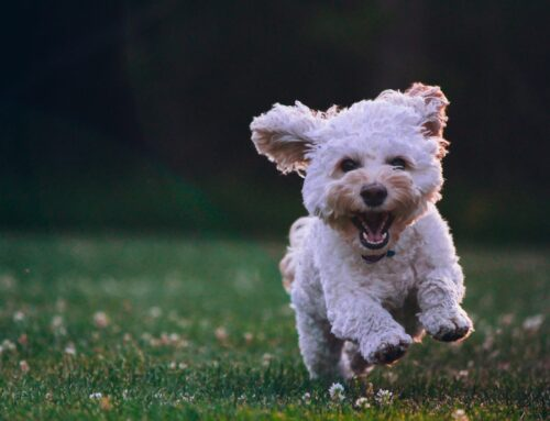 Seeking dogs for pilot study